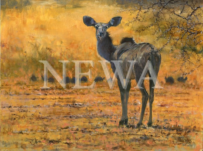 Kudu At Andersson's Camp by Paul Apps