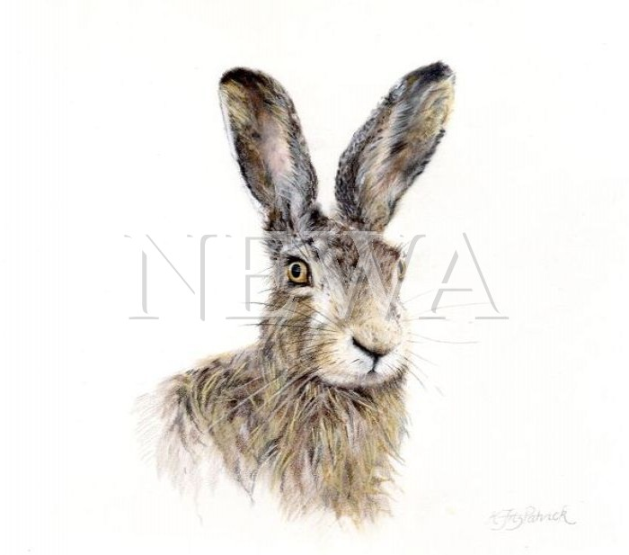 Brown Hare by Kirstie Fitzpatrick