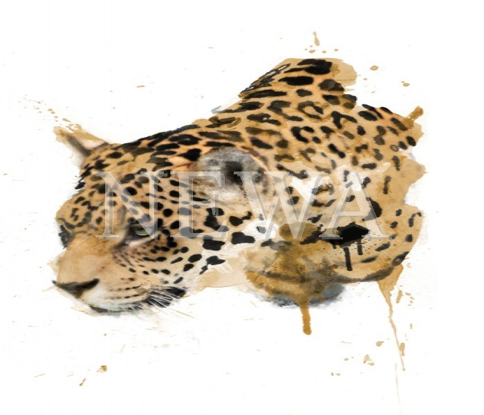Leopard by Ben Ark
