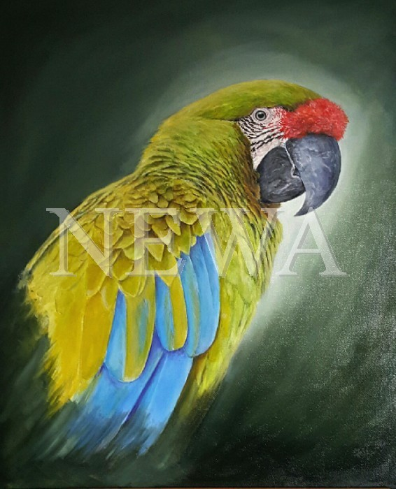 Great Green Macaw by Ian Griffiths