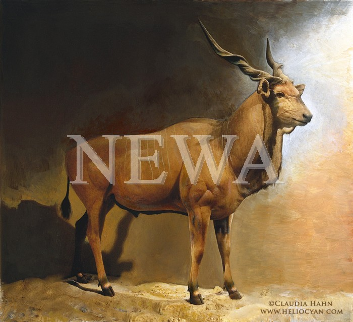 Giant Eland by Claudia Hahn