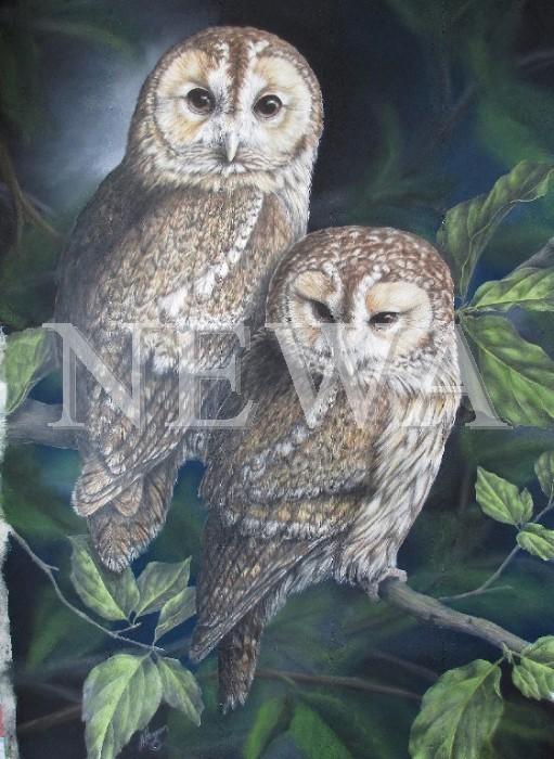 Tawny Owls by Linda Hampson