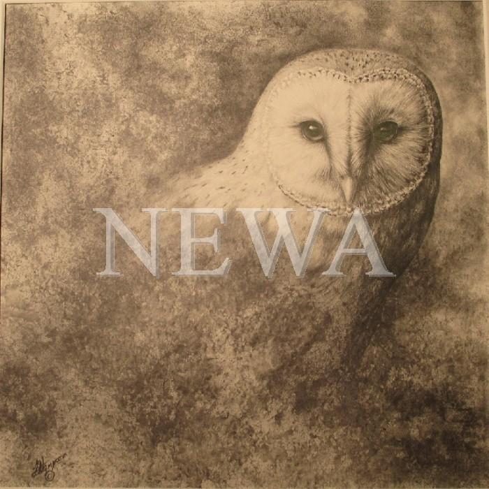 Barn Owl by Linda Hampson