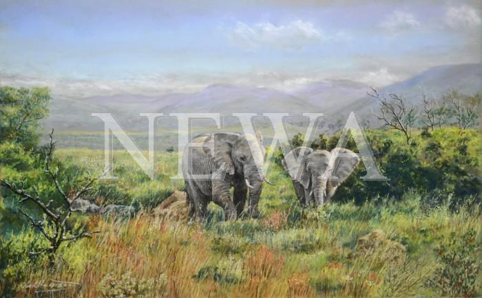 Elephants On The Shamwari by Mike Harrison