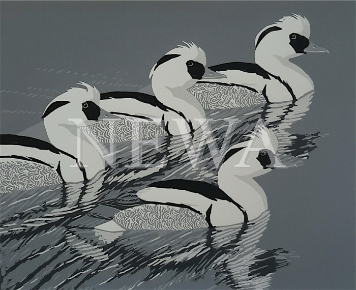 Smew Parade by John Hatton