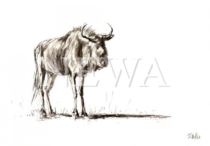 Blue Wildebeest by James Hollis