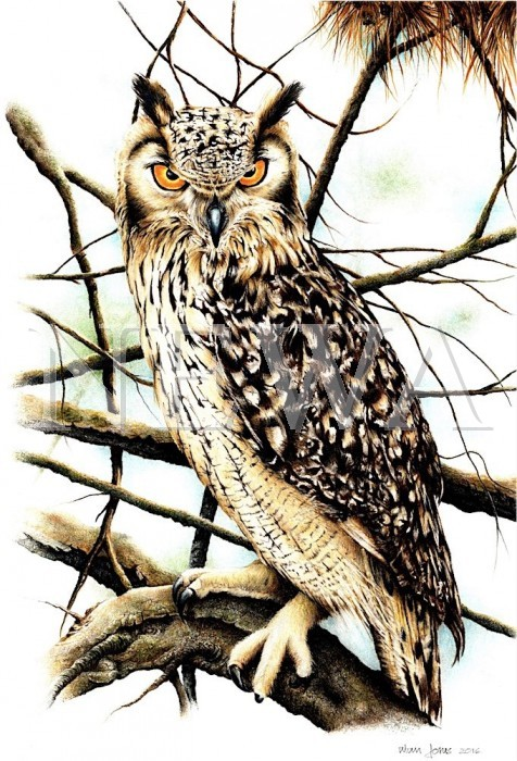 Owl by Alan Jones