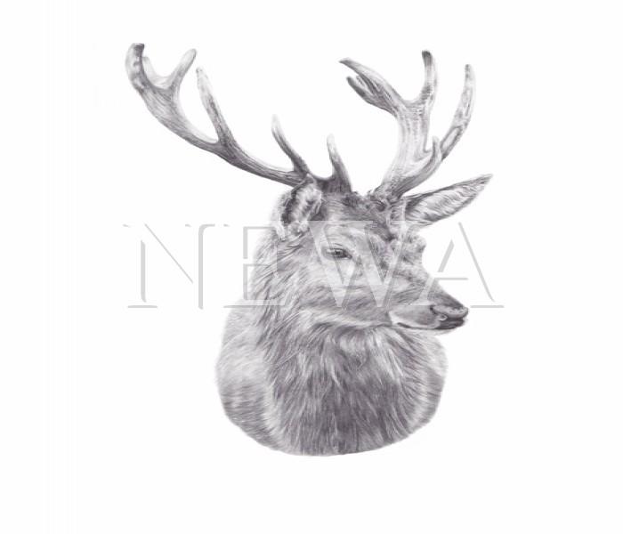 Deer by Alannah Barker