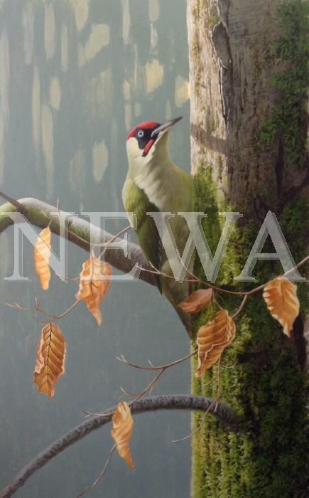 Green Woodpecker by Jonathan Latimer