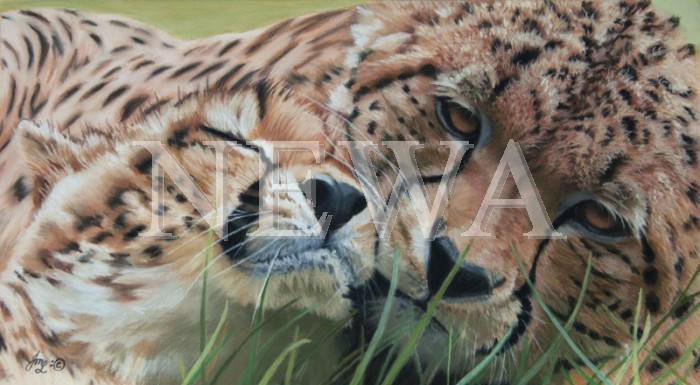 Cheetah Brothers by Julie Longdon