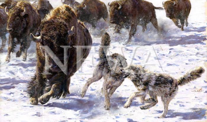 Tundra Thunder by Stella Mays