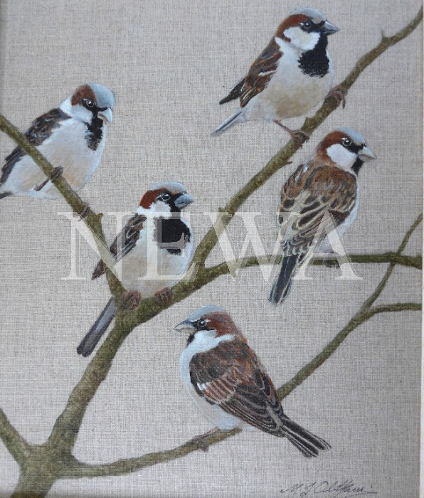 A Host Of Sparrows by Mary Oldham
