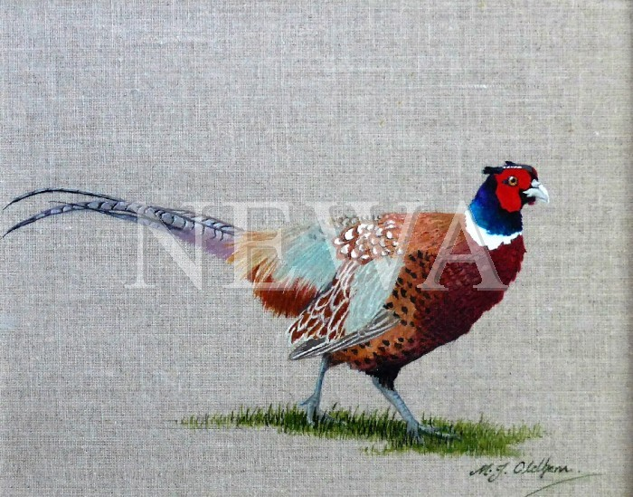 Cock Pheasant by Mary Oldham