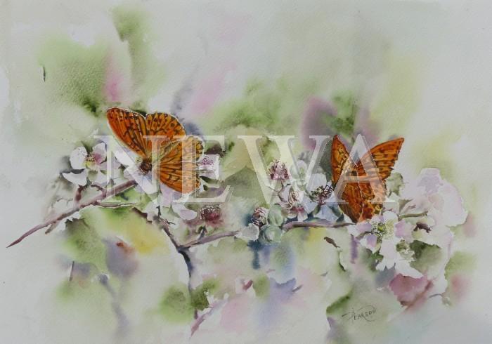 Silverwashed Fritillaries by Di Pearson