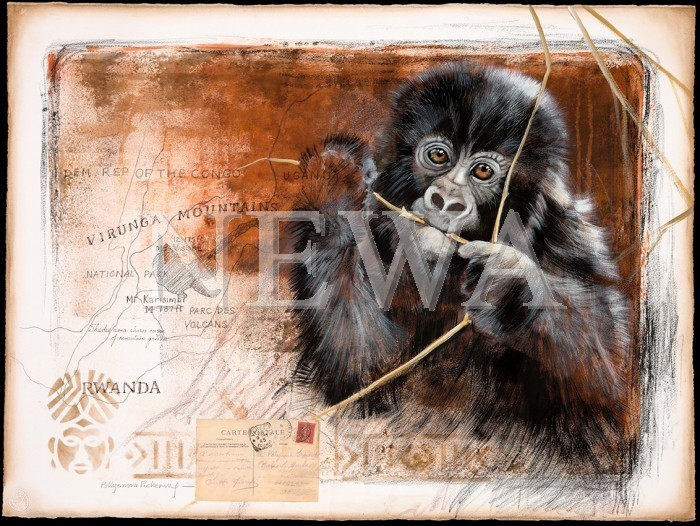 The Virunga Mountains by Pollyanna Pickering