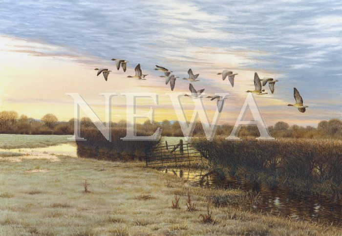 Pink Footed Geese. by W. Geoff Rollinson