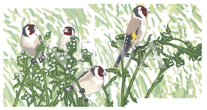 Goldfinches by Chris Sinden