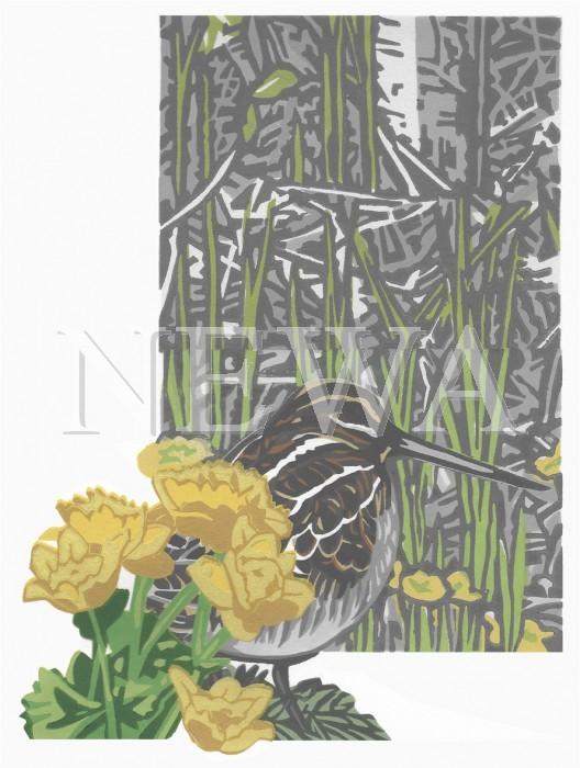 Marigold Snipe by Chris Sinden