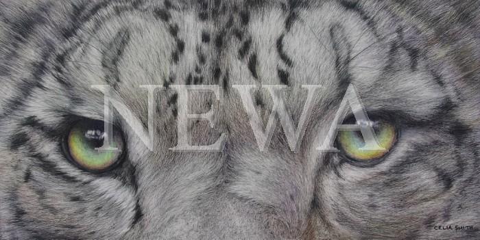 Eye-2-eye by Celia Smith
