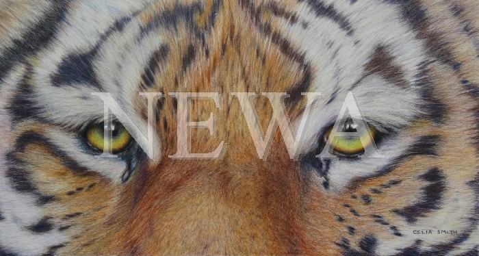 Eyes Of The Tiger by Celia Smith