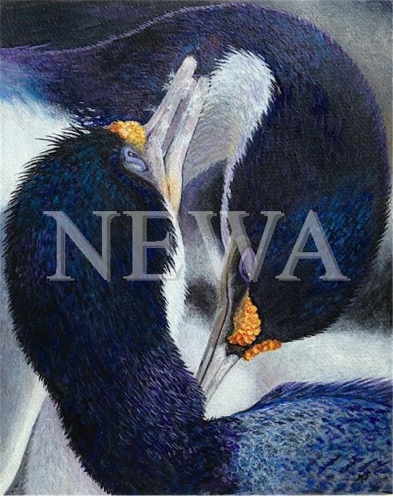 King Cormorants Bonding by Margaret Smith