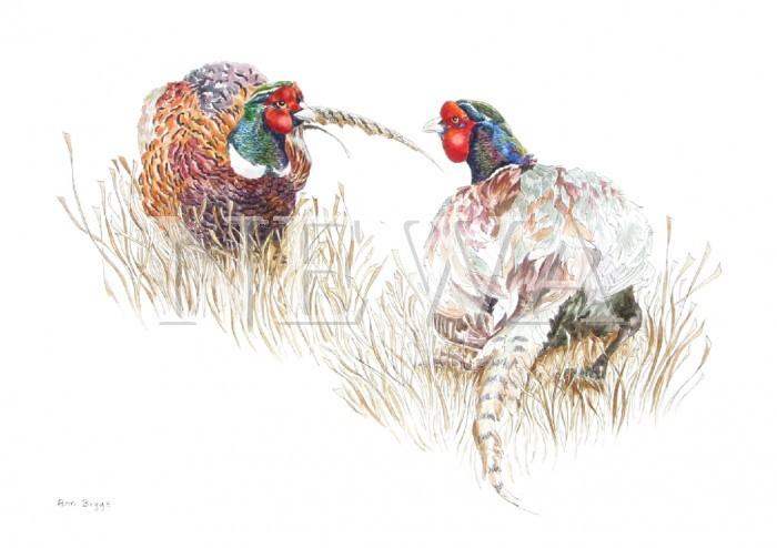 Fighting Cocks by Ann Biggs