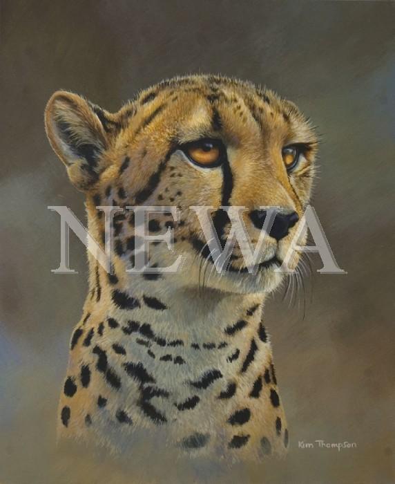 Cheetah Study by Kim Thompson