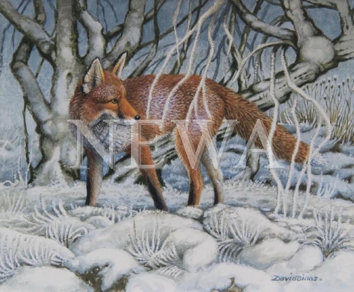 Winter Fox by David Binns