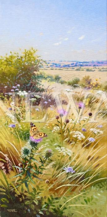 Paintedlady&cloudedyellow by Richard Tratt