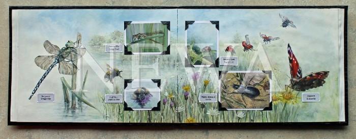 Arthropod Sketchbook by Jean Upton