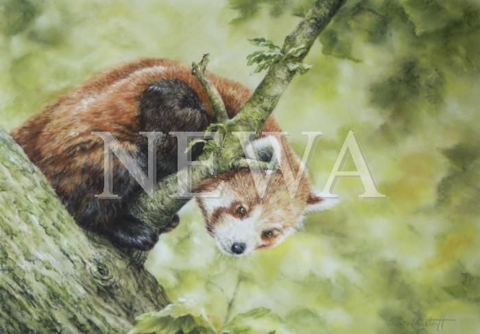 Red Panda by Sharon Wagstaff
