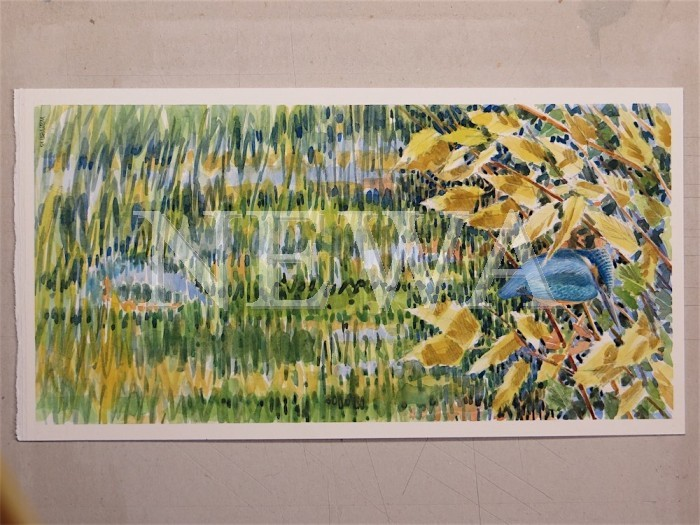 Kingfisher by Michael Warren