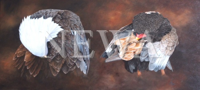 Preening Eagles by Anthony Webb