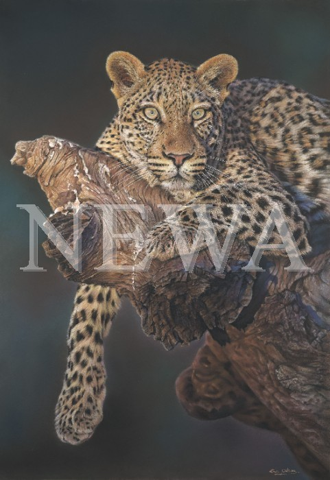 African Leopard by Eric Wilson