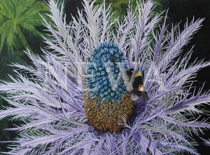 Bee And Sea Holly by Sarah Wood