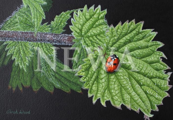 Seven Spot Ladybird by Sarah Wood
