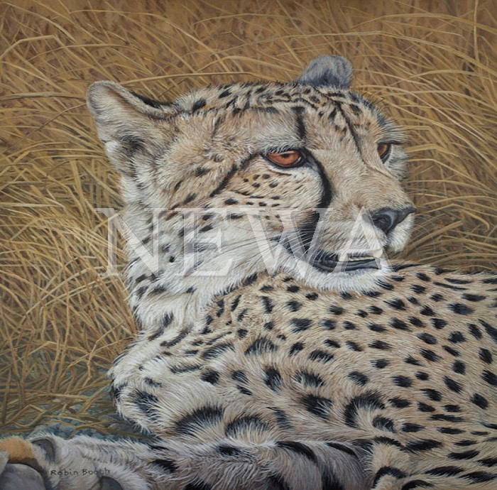 Cheetah by Robin Booth