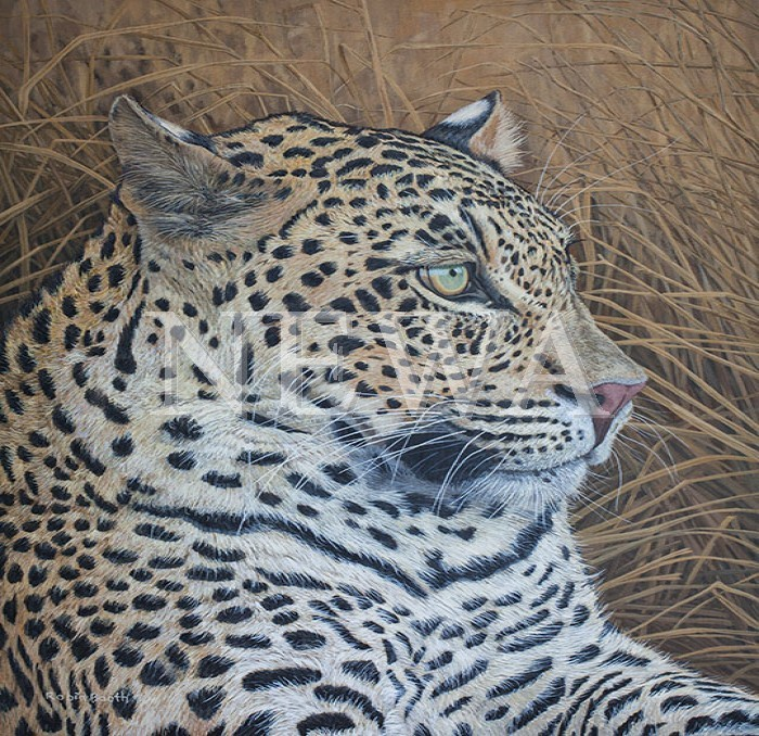 Leopard by Robin Booth