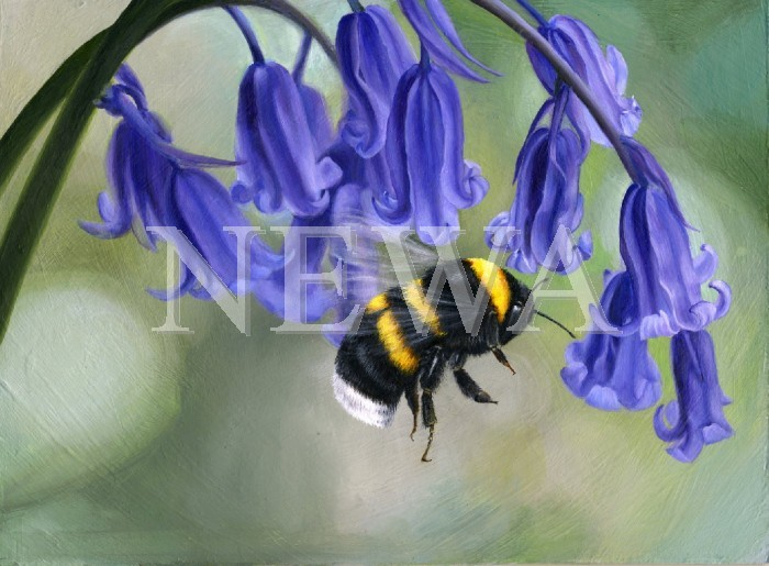 Bluebell And Bumblebee by Kate And Hannah Breach
