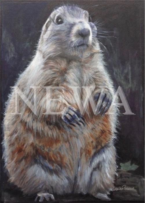 Marmot by Brenda Brisco