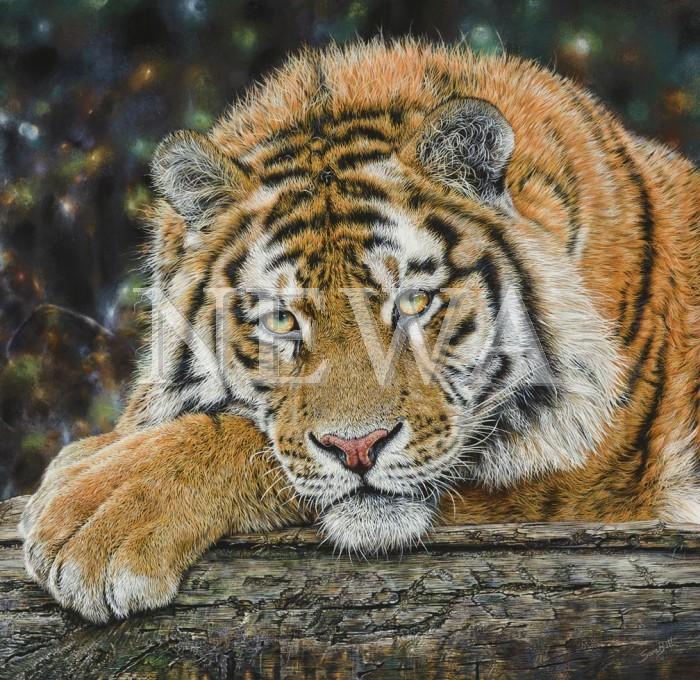 Tiger Tiger by Sara Butt