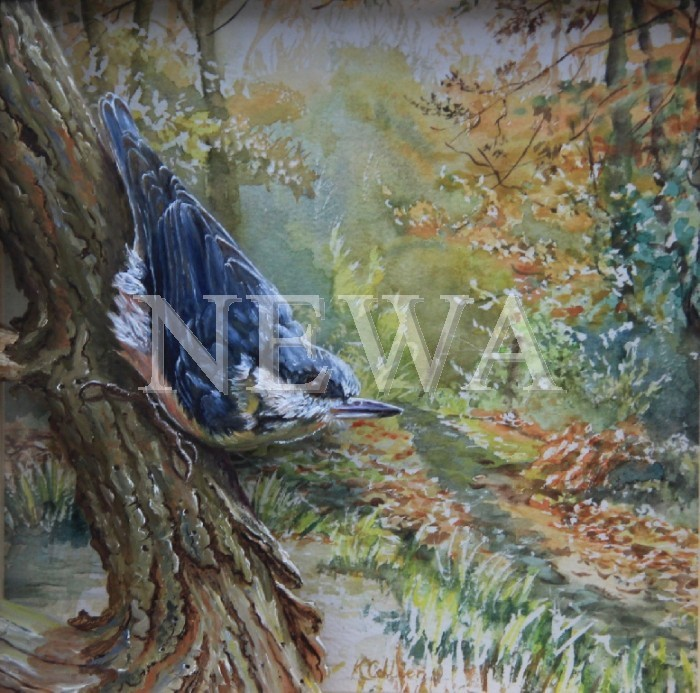 A Walk Through The Woods by Kath Collier