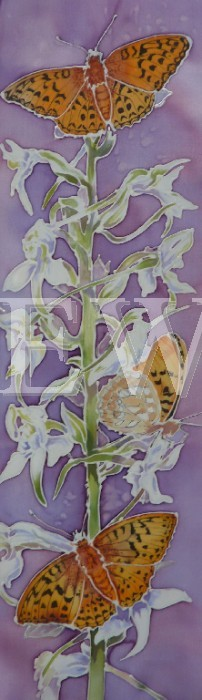 Butterfly Orchid by Jackie Cox