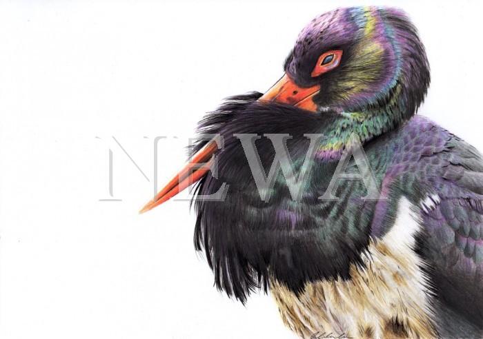 Black Stork by Gemma Crombleholme
