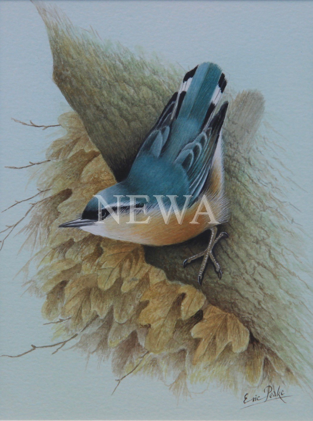 Nuthatch And Oak by Eric Peake