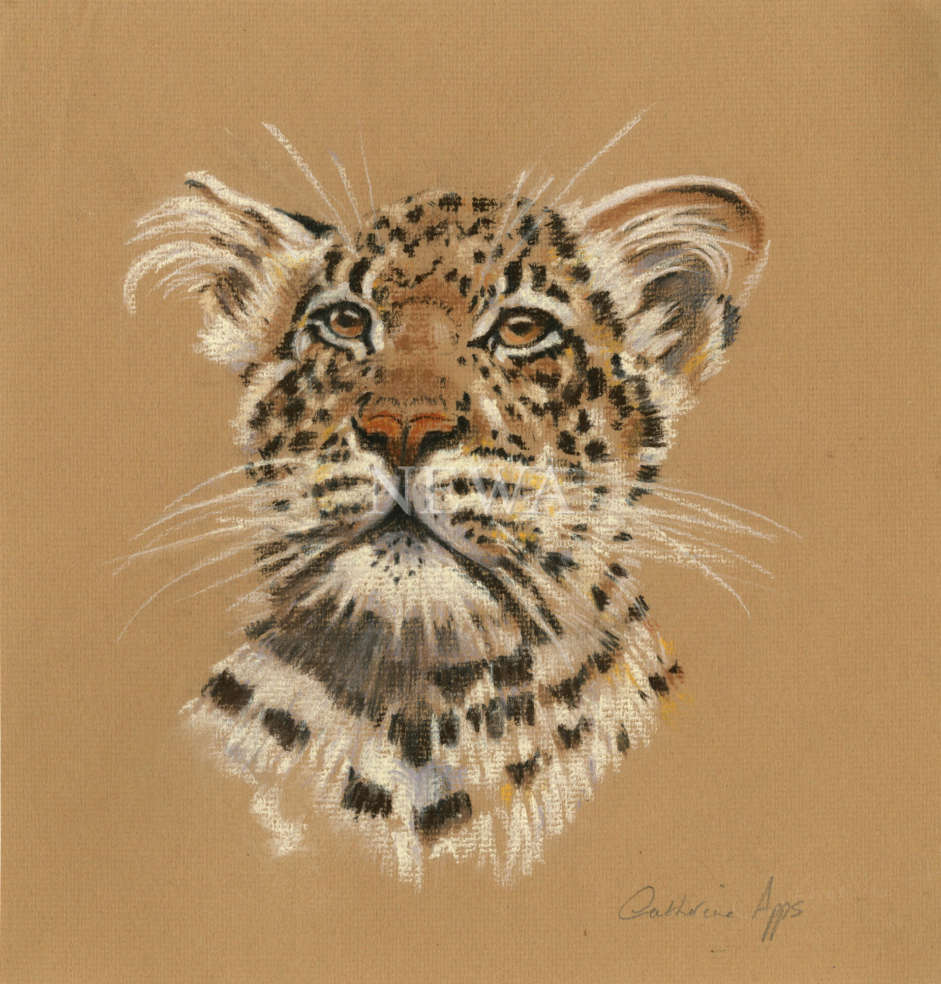 Leopard Portrait by Catherine Apps