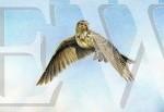 Skylark Ascending by Nick Day