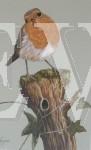 Curious Robin by Janice Ferguson