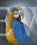 Blue And Gold Macaw by Ian Griffiths