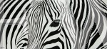 Zebra Curves by Julie Longdon
